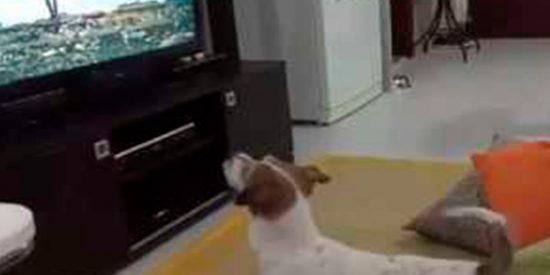 [VÍDEO] Este es el perrito adicto a la canción 'Despacito'