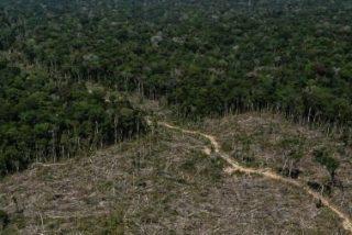 """REPAM-Brasil """"repudia públicamente el anuncio antidemocrático"""" del Gobierno de esquilmar la Amazonía"""