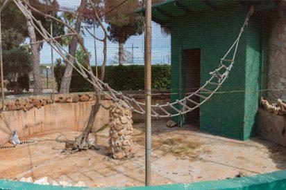 Según InfoZOOS los zoos en Mallorca no superan el examen de calidad