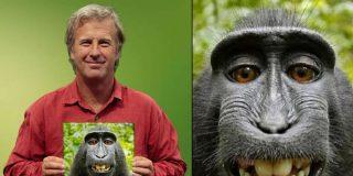 La batalla judicial humano-macaco por los derechos de un 'selfie' duró dos años y ganó el simio