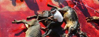 [VÍDEO] La venganza del cabreado animal que iba a ser sacrificado por un devoto musulmán