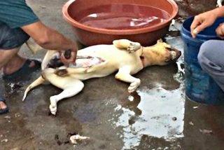 Hambre en la Venezuela chavista: la gente ha empezado a comer perros