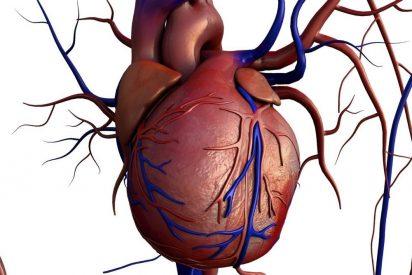 ¿Sabes por qué tenemos el corazón inclinado hacia la izquierda?