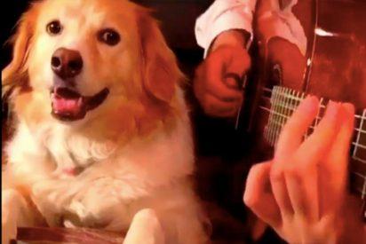 El espectacular perro músico que lo peta en redes sociales con videos de sus canciones