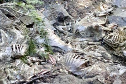 150 ovejas mueren despeñadas huyendo de un oso
