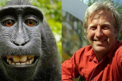 La batalla judicial humano-macaco por los derechos de un 'selfie' llega a su fin: condenado el hombre