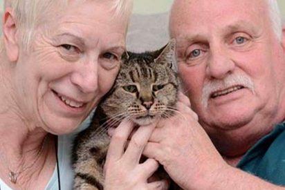 [VÍDEO] Muere en Inglaterra el gato más viejo del mundo