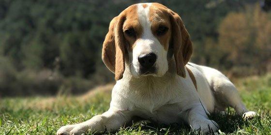 El Top 5 de Razas de Perros para niños