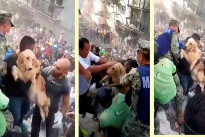 [VÍDEO] Perrito rescatado devuelve felicidad, por un momento, a los mexicanos tras el terrible terremoto