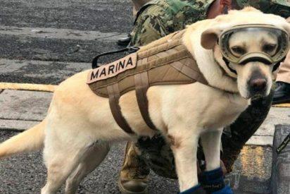 [VÍDEO] La perrita que salva vidas