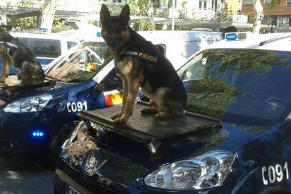Los dos perros de la Policía Nacional que unos rabiosos separatistas han vetado en Cataluña