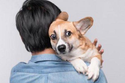¿Eres de los que creen que los perros pueden oler el miedo?