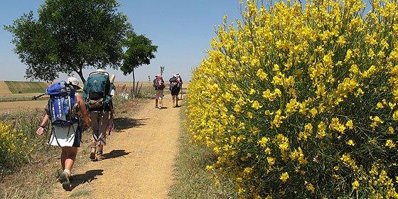 'El Camino de Santiago: nuevo atrio de los gentiles'