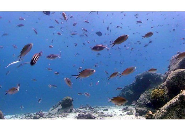 Francisco pide cuidar los océanos, patrimonio de la humanidad
