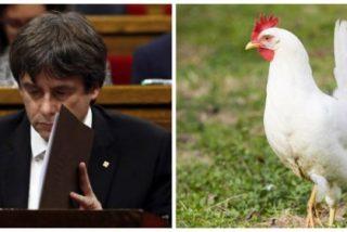 """Raúl del Pozo se mofa de 'Gallina Blanca Cocomocho': """"Ayer ni siquiera parió un ratón, sino una cucaracha"""""""