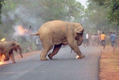 'El infierno está aquí': La dramática imagen de una cría de elefante en llamas
