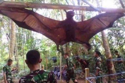 El terrorífico murciélago vampiro de casi dos metros que han capturado en Filipinas