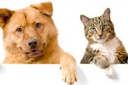 ¿Sabías que los perros son más inteligentes que los gatos?