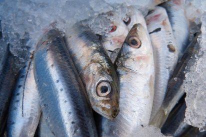 Las humildes sardinas serán el próximo caviar