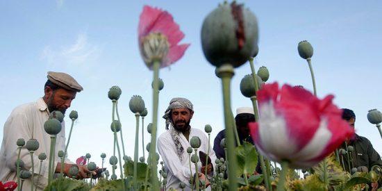 La liberalización de las drogas entrañaría una catástrofe según Rusia