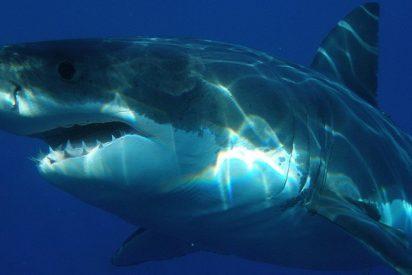 [VIDEO] Un tiburón blanco casi le arranca la cabeza a un buceador