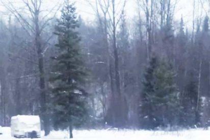 Así es el escalofriante alarido que sale de las entrañas de este misterioso bosque