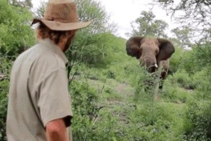 Así detiene la letal embestida de un elefante este guía experto