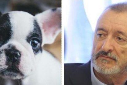 """La carta de Arturo Pérez-Reverte que debes compartir cada Navidad: """"No compres ese perro"""""""