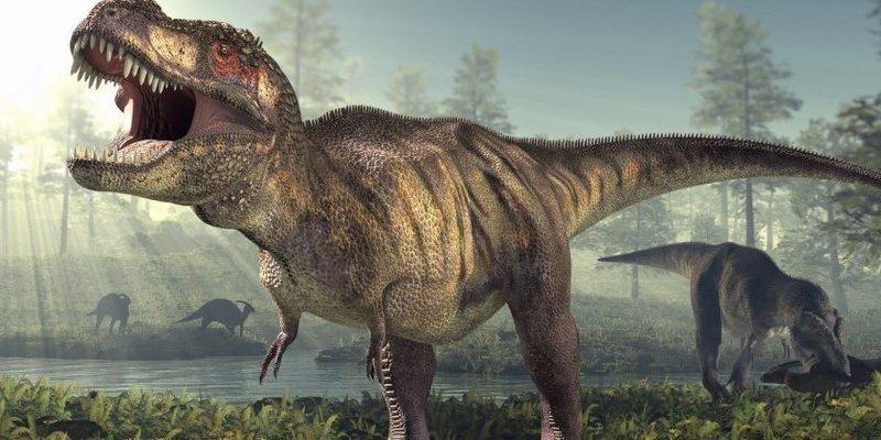 Pide una funda de almohada en Amazon y le mandan todo, con niño y dinosaurio incluidos