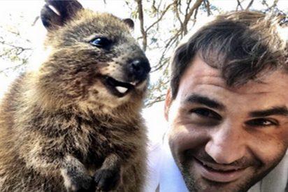 El selfie de Roger Federer con un quokka
