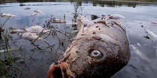 Ahora Madrid aniquila con descargas eléctricas a los 14.000 peces del lago de la Casa de Campo