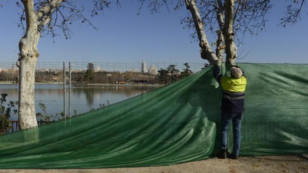 Vaciado del lago de la Casa de Campo: «Eutanasia» para 6,5 toneladas de peces