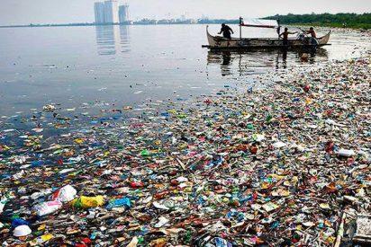 Hallan restos de plástico en mejillones de océanos desde el Artico a las costas de China