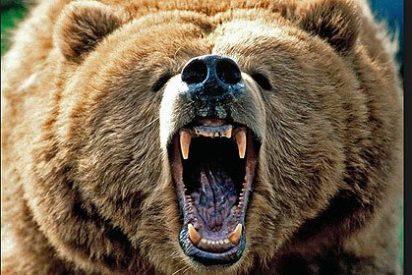 Los osos ya tenían caries hace 3,5 millones de años