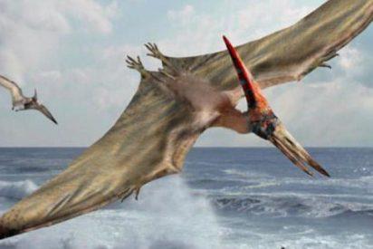 Los feroces pterosaurios, los antiguos dueños de los cielos, eran muy paternales