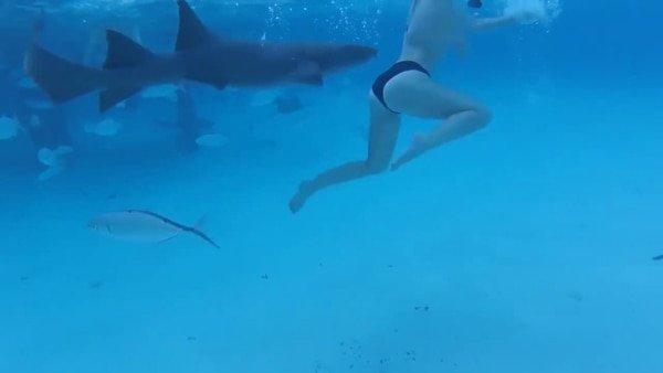 El aterrador momento en que una mujer es mordida por un tiburón en plena luna de miel