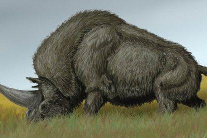 Hallan en territorio de la antigua URSS restos del 'último unicornio'
