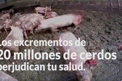 """""""En Cataluña hay más cerdos que personas"""""""