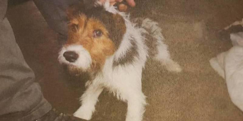 Una juez retira la propiedad de un perro a dos okupas por la 'mala vida' que le daban