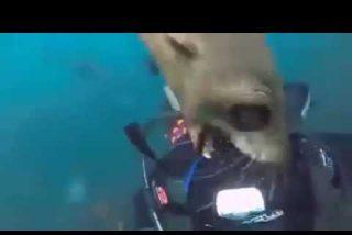 [VÍDEO] Lo que nunca verás en Discovery Channel