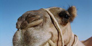 """Rusa se hace un """"Camel Trophy"""" para saltarse los enormes atascos de la hora punta"""