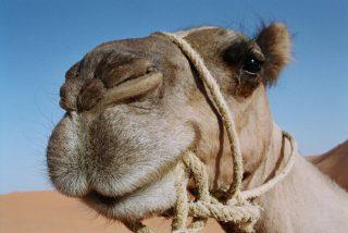 Muerde los testículos para evitar morir aplastada por el exótico animal