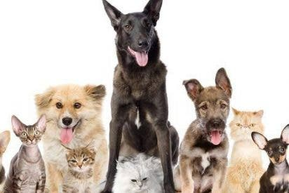 Consejos útiles para tener un perro y un gato viviendo juntos en la misma casa