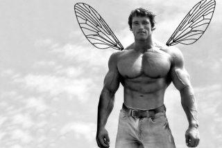 Arnold Schwarzenegger da nombre a la mosca más fortachona del mundo