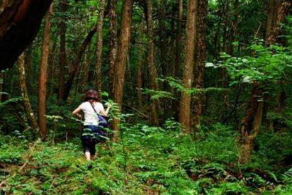 Así es Aokigahara, el bosque de los suicidios de Japón