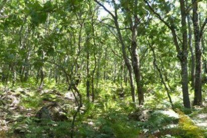 Los bosques 'se mudan' del Tercer Mundo a los países desarrollados
