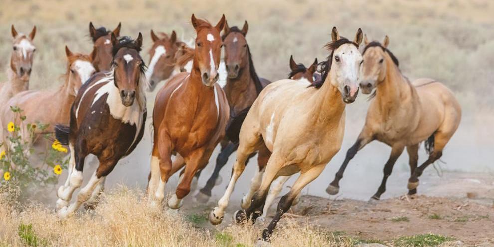 ¿Sabías que los caballos tenían cinco dedos y conservan restos de su estructura ancestral?