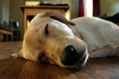 10 curiosidades sobre los sueños de los animales