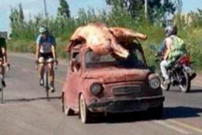 Así se llevan en el capó del coche la carne que acababan de robar