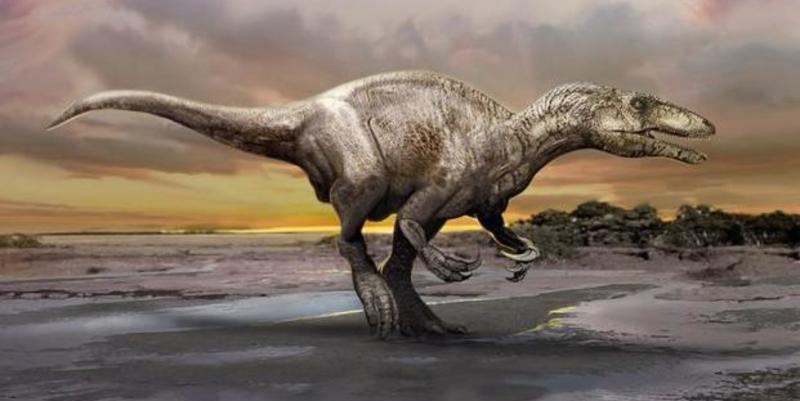 Hallan en Australia un dinosaurio del tamaño de un pavo... fosilizado